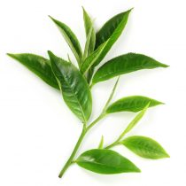 purcoragnics - tea tree oil
