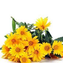 purcorganics - Chrysanthemum flower Extract