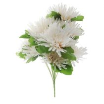 purcorganics - Chrysanthemum
