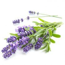 purcorganics - Lavender