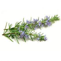 purcorganics - Rosemary extracts